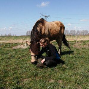 Demi I Zorgboerderij de Polder